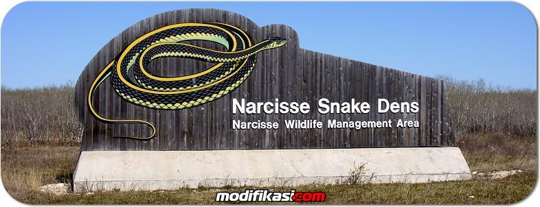 : kunjungi pedesaan narcisse kanada, ada kolam ular terbesar di dunia