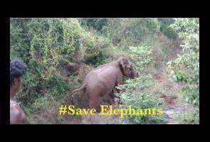 Video: Melecehkan & Menyerang Gajah, Tiga Pemuda Di India Didakwa