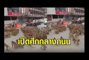 Berebut Makanan, Dua Geng Monyet Di Thailand Berkelahi