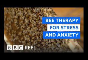Video: Negara Slovenia Bermeditasi Dengan Gunakan Suara Lebah