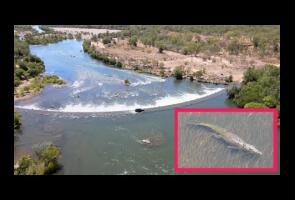 Video: Hiu Banteng Ini Lari Saat Lihat Buaya Di Perairan Australia
